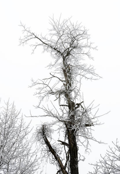 Photograph - Frosty Tree On The Blue Ridge Parkway by Greg Reed