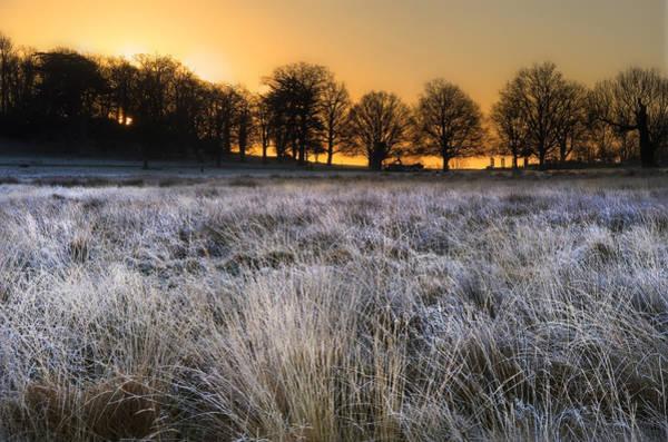 Fern Frost Photograph - Frosty Winter Landscape Across Field Towards Vibrant Sunrise Sky by Matthew Gibson