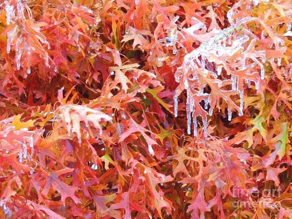 Wall Art - Photograph - Frozen 3 by Robert ONeil