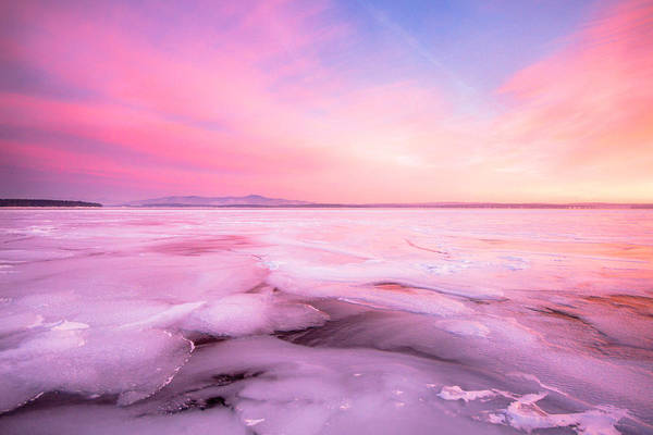 Photograph - Frozen Beauty by Robert Clifford