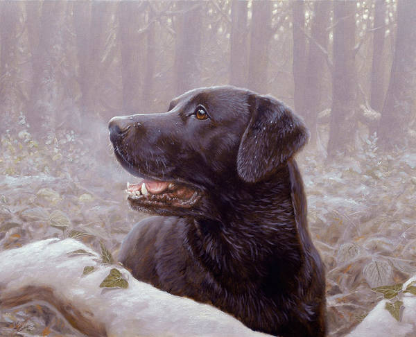 Border Collie Painting - Frozen Breath by John Silver