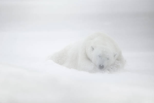 Polar Photograph - Frozen Dreams by Marco Pozzi