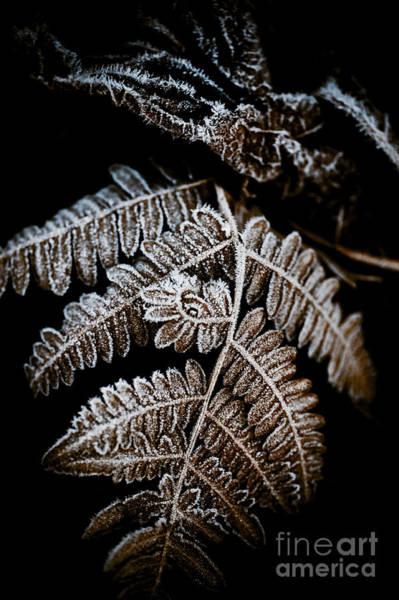Fern Frost Photograph - Frozen Fern by Venetta Archer