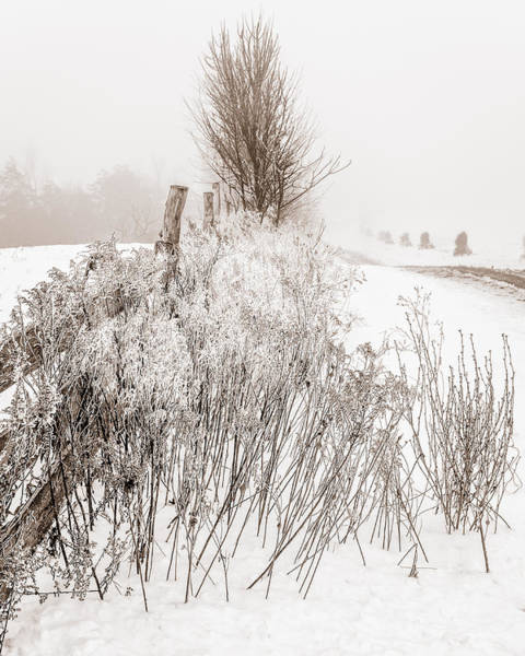 Wny Wall Art - Photograph - Frozen Fog On A Hedgerow - Bw by Chris Bordeleau