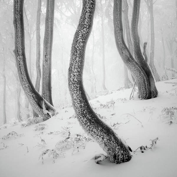 Frost Wall Art - Photograph - Frozen Forest by Martin Rak