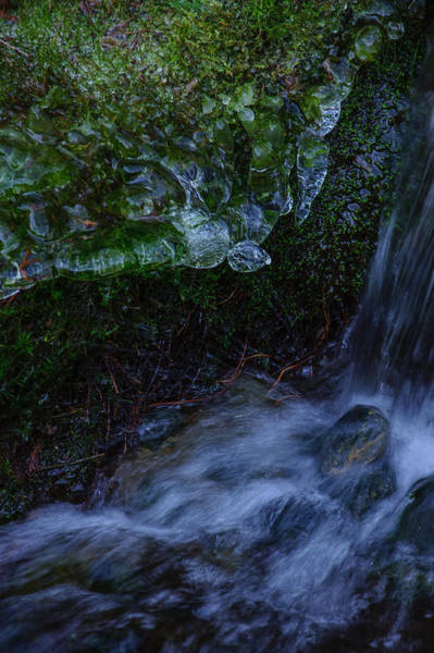 Photograph - Frozen Garden Stream by Roxy Hurtubise