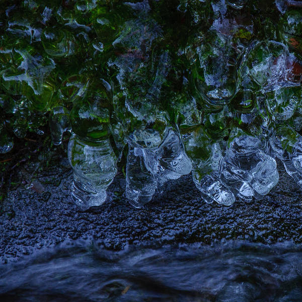 Photograph - Icicle Garden  by Roxy Hurtubise