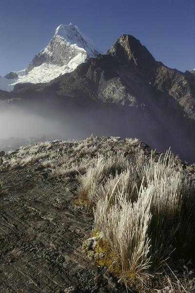 Dixon Photograph - Frozen Grasses And Nevado Chopicalqui by Grant  Dixon