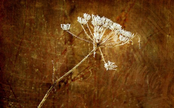 Photograph - Frozen Lace by Mary Jo Allen