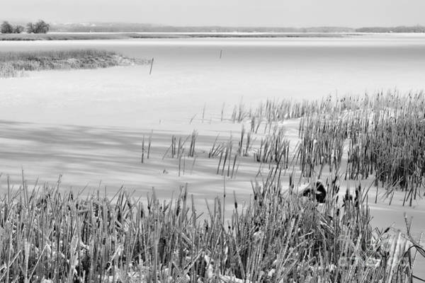 Southern Ontario Photograph - Frozen Lake And Ice Coated Bullrushes by Louise Heusinkveld