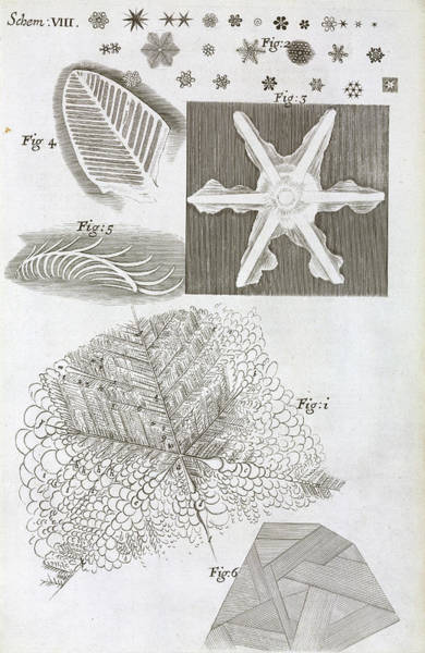 1665 Wall Art - Photograph - Frozen Objects by Natural History Museum, London/science Photo Library
