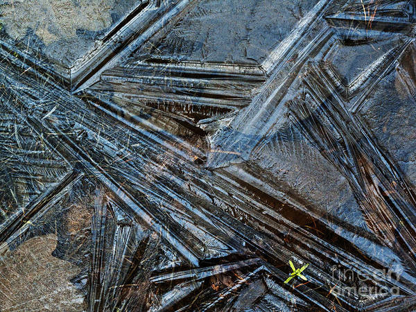Photograph - Frozen Puddle by Heiko Koehrer-Wagner