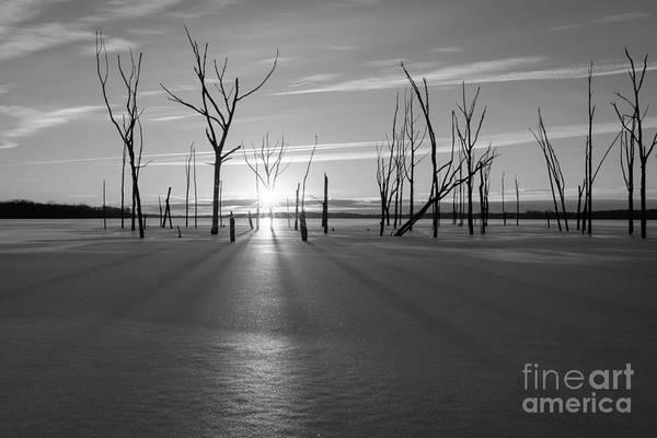 D800 Photograph - Frozen Shadows Bw by Michael Ver Sprill