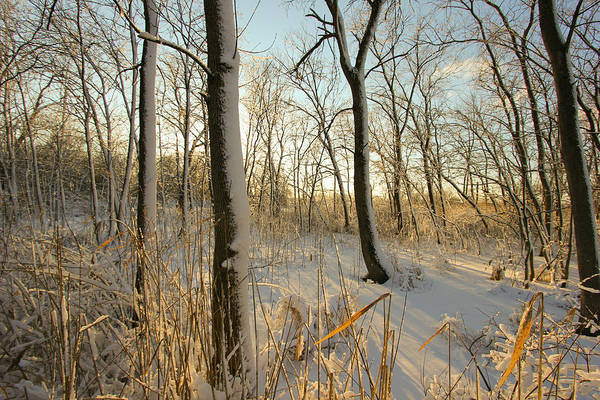 Wall Art - Photograph - Frozen Swamp At Golden Hour by Jackie Novak