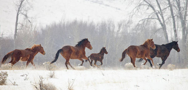 Mustangs Photograph - Frozen Track by Mike  Dawson