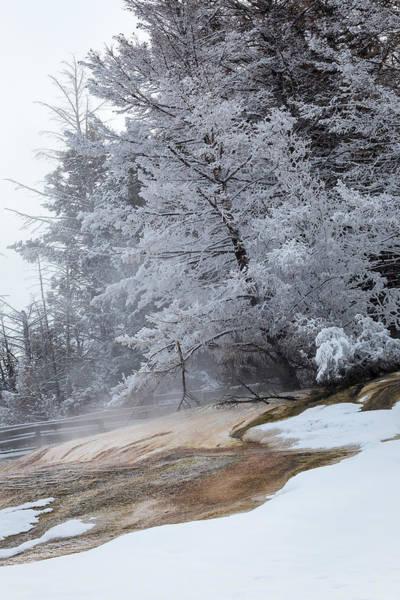 Photograph - Frozen Tree by Michael Chatt