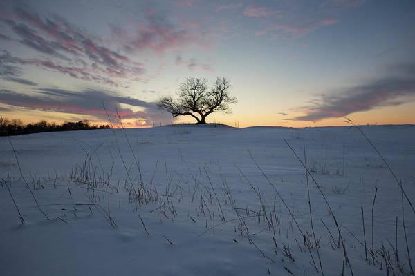 Shutter Speed Photograph - Frozen Tree Of Wisdom by Aaron J Groen