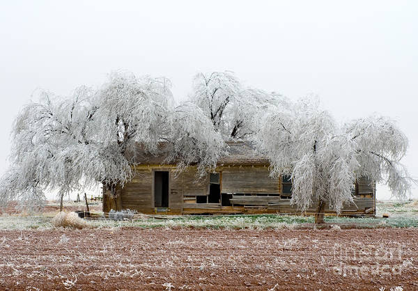 Photograph - Frozen Trees And Shack by Mae Wertz