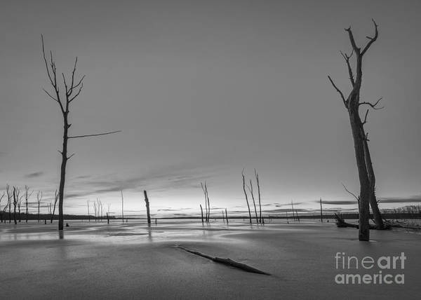 D800 Photograph - Frozen Trees Bw by Michael Ver Sprill