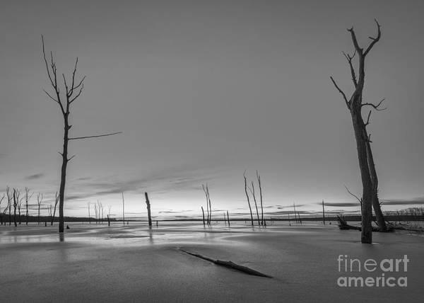 Nikon D800 Wall Art - Photograph - Frozen Trees Bw by Michael Ver Sprill