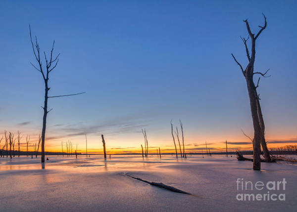 D800 Photograph - Frozen Trees by Michael Ver Sprill