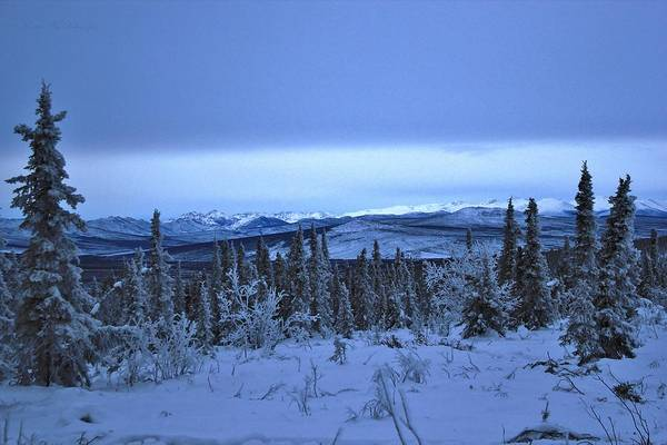 University Of Alaska Photograph - Frozen Wilderness by David Broome