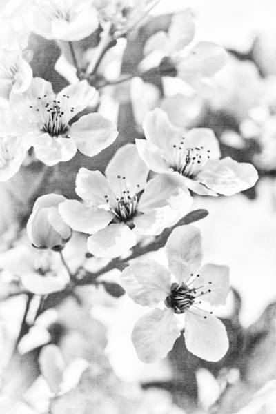 Roms Photograph - Fruit Or Flower? by Caitlyn  Grasso