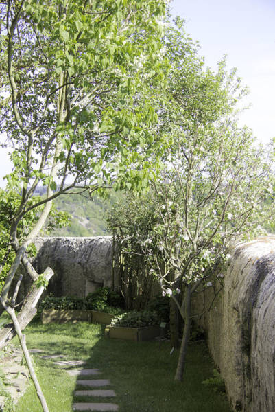 Strawberry Hills Wall Art - Photograph - Fruit Trees At Marksburg Castle by Teresa Mucha