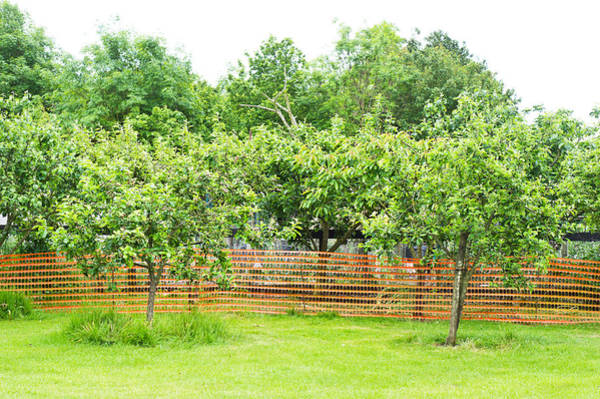 Smallholding Photograph - Fruit Trees by Tom Gowanlock