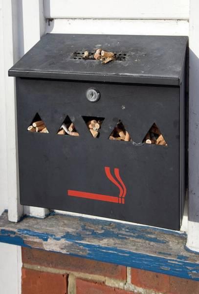 Litter Photograph - Full Cigarette Bin by Paul Rapson/science Photo Library