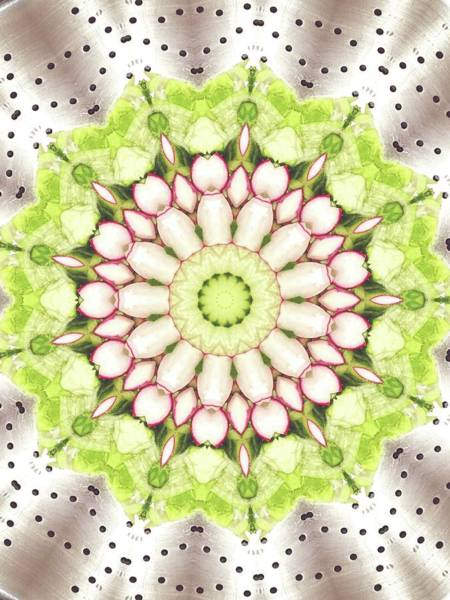 Kaleidoscopes Photograph - Full Frame Shot Of Radish And Cucumber by Mark Jones / Eyeem