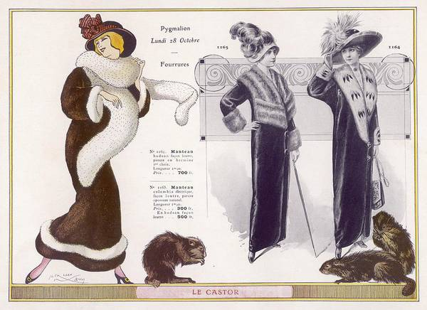 Fur Coat Drawing - Full-length Coats In Beaver  Fur by Mary Evans Picture Library