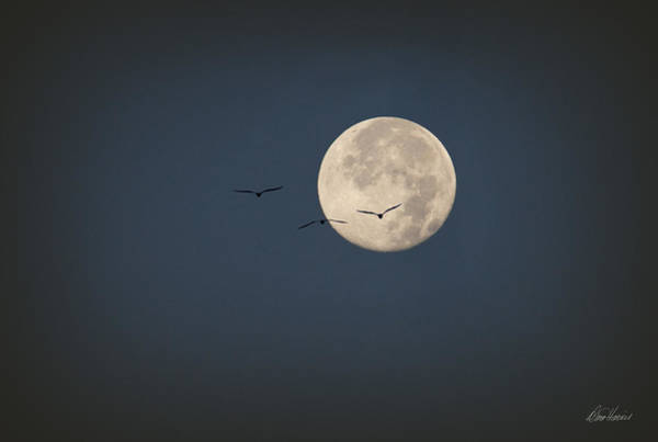 Photograph - Full Moon At Dawn by Diana Haronis