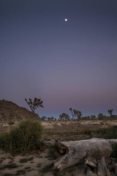 Photograph - Full Moon At Joshua Tree by Lee Kirchhevel