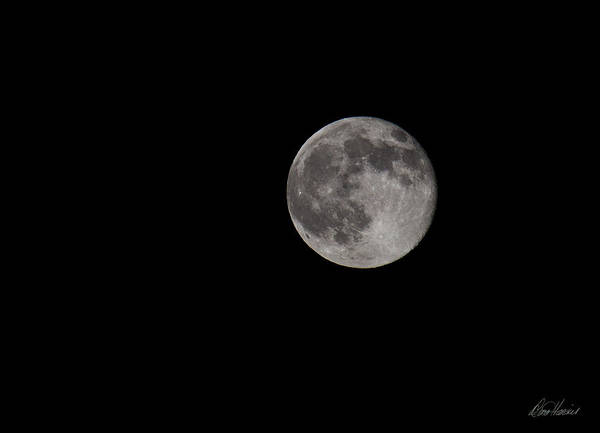 Photograph - Full Moon At Midnight by Diana Haronis