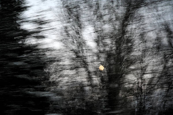 Full Moon Behind Trees Art Print by Carolyn Reinhart