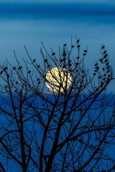 Photograph - Full Moon by Bob Orsillo