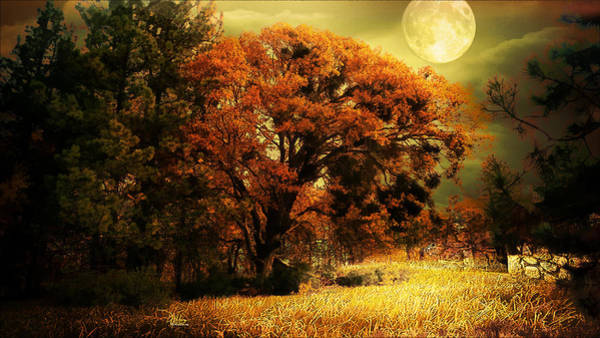 Full Moon Oak Art Print