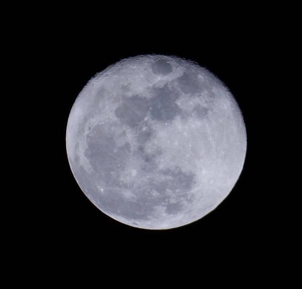 Photograph - Full Moon by Pamela Walton