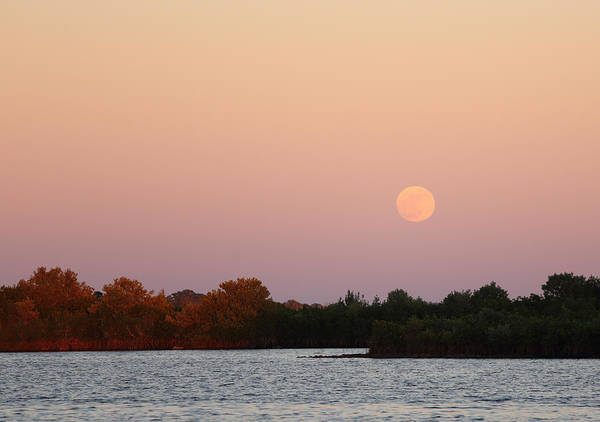 Photograph - Full Moon Rise At Ozello by Jean Clark