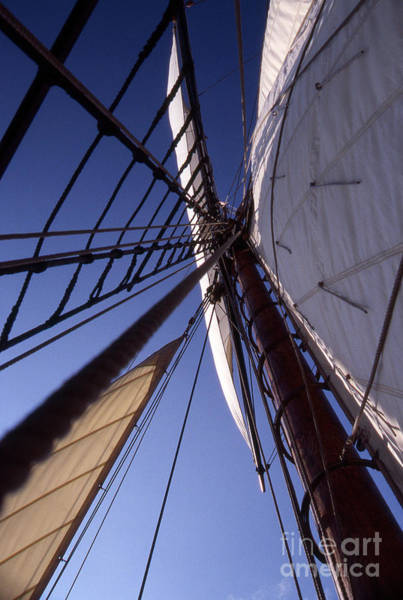 Sailing Terms Photograph - Full Sail by Skip Willits