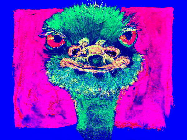 Wall Art - Painting - Funky Ostrich Cool Dude Art Prints by Sue Jacobi