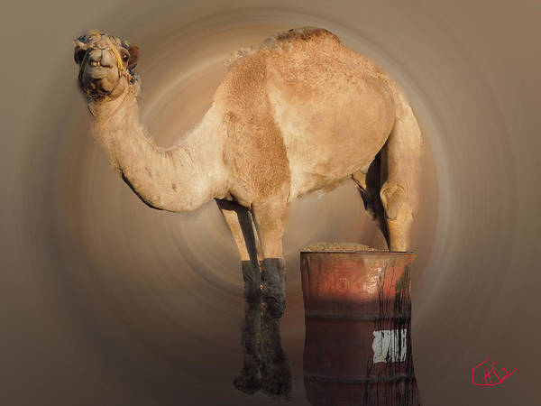 Photograph - Funny Beduin Camel Talk  by Colette V Hera  Guggenheim