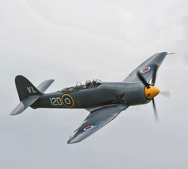 Hawker Sea Fury Photograph - Fury by James Lucas
