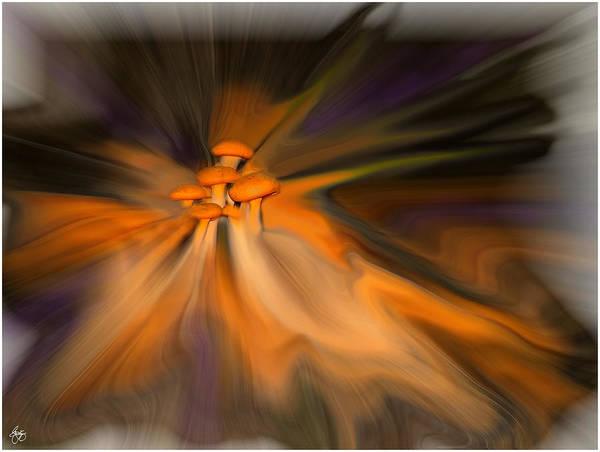 Photograph - Fusion Of Magic Mushrooms by Wayne King