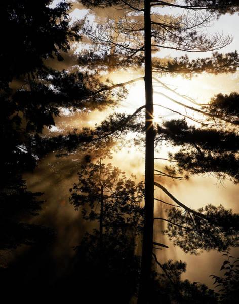 Rawdon Photograph - Fv5423, Perry Mastrovito Sunrise Though by Perry Mastrovito