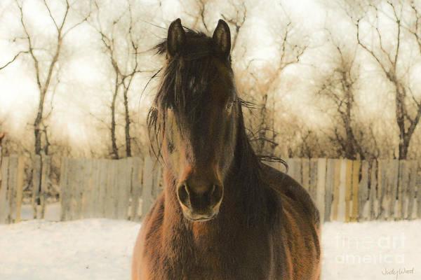 Snow Fence Digital Art - Gabriel In Winter by Judy Wood