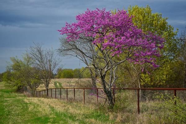 Photograph - Gainesville 6718 by Ricardo J Ruiz de Porras