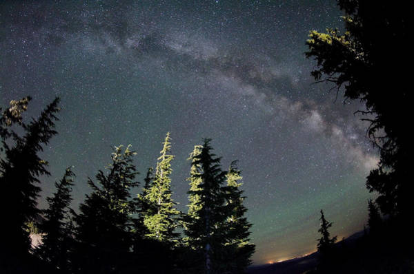 Photograph - Galactic Forest by Margaret Pitcher