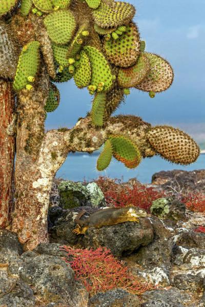 Wall Art - Photograph - Galapagos Islands, Ecuador, Galapagos by Art Wolfe